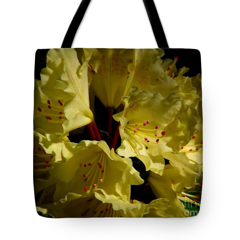 Yellow Rhododendron Tote Bag featuring the photograph Yellow Rhododendron by CapeScapes Fine Art Photography