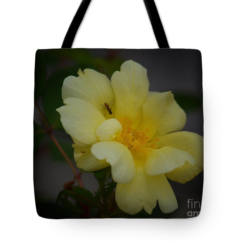 Yellow Rose 14-1 Tote Bag featuring the photograph Yellow Rose 14-1 by Maria Urso