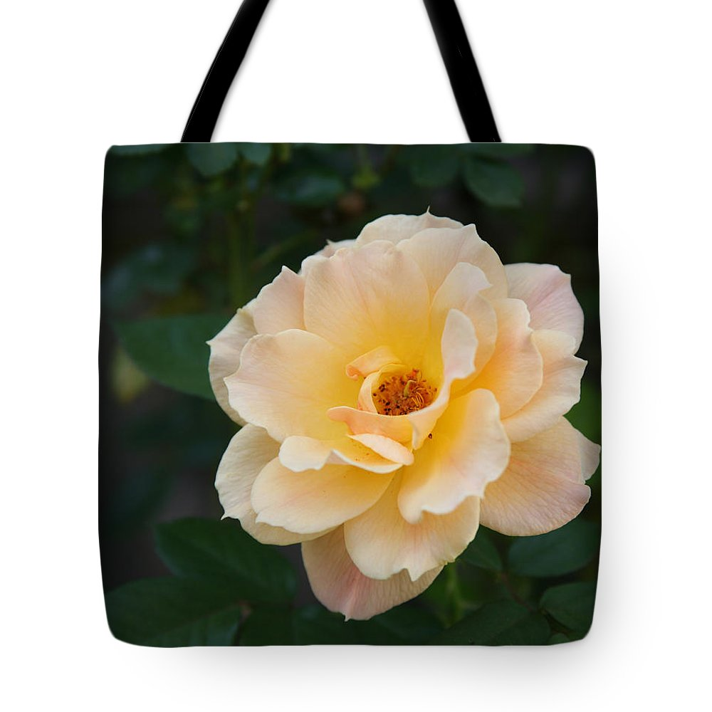 Flower Tote Bag featuring the photograph Yellow Rose Of Texas by Tim Stanley