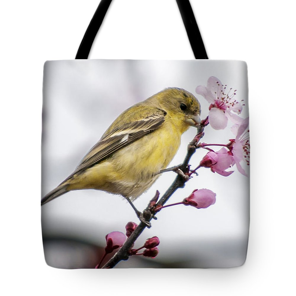 Birds Tote Bag featuring the photograph Western Tangier by Jim Thompson