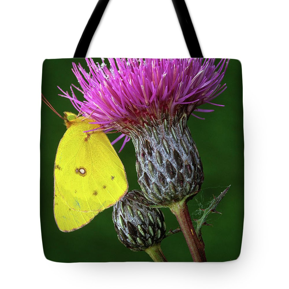 Sulfur Butterfly Tote Bags