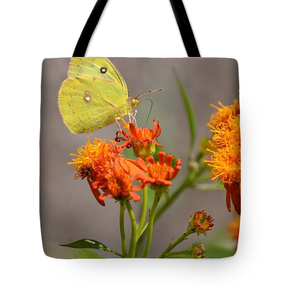 Yellow Sulphur Butterfly Tote Bag featuring the photograph Yellow Sulphur Butterfly by Debra Martz