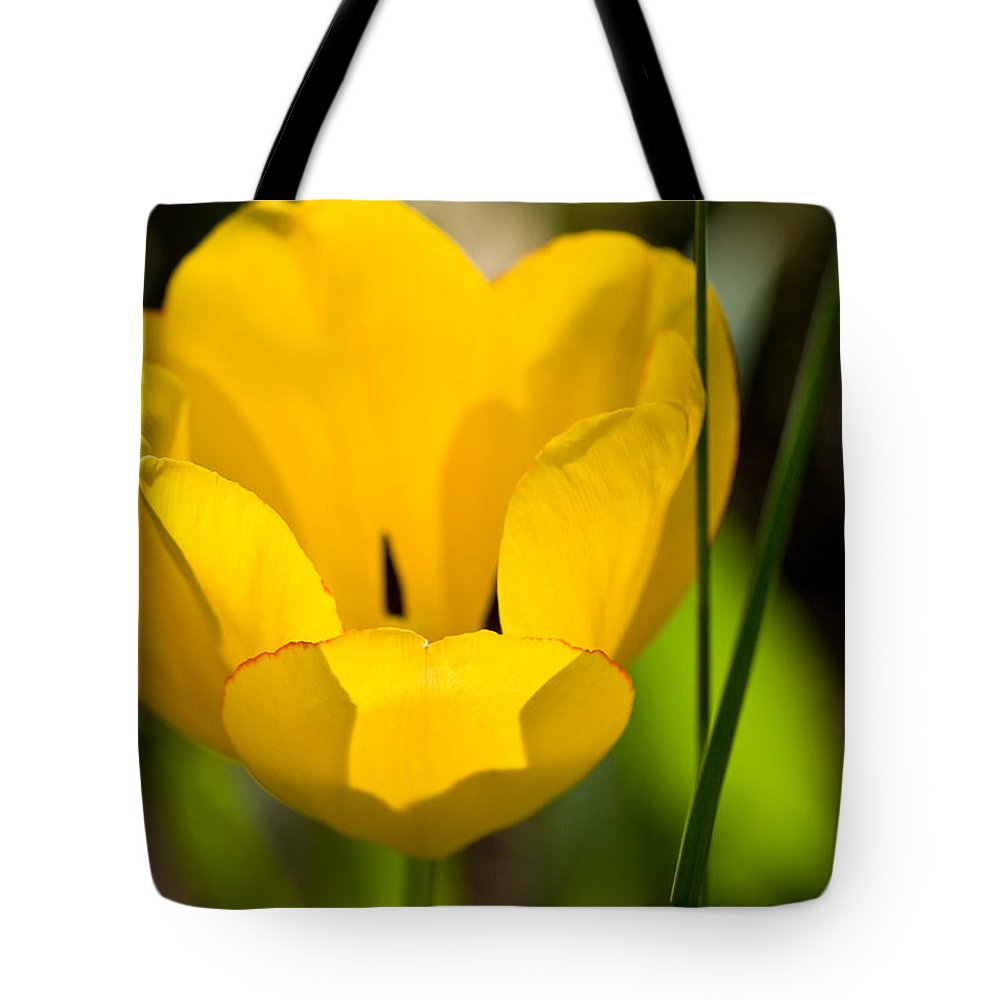 Yellow Tote Bag featuring the photograph Yellow Tulip by Melinda Fawver