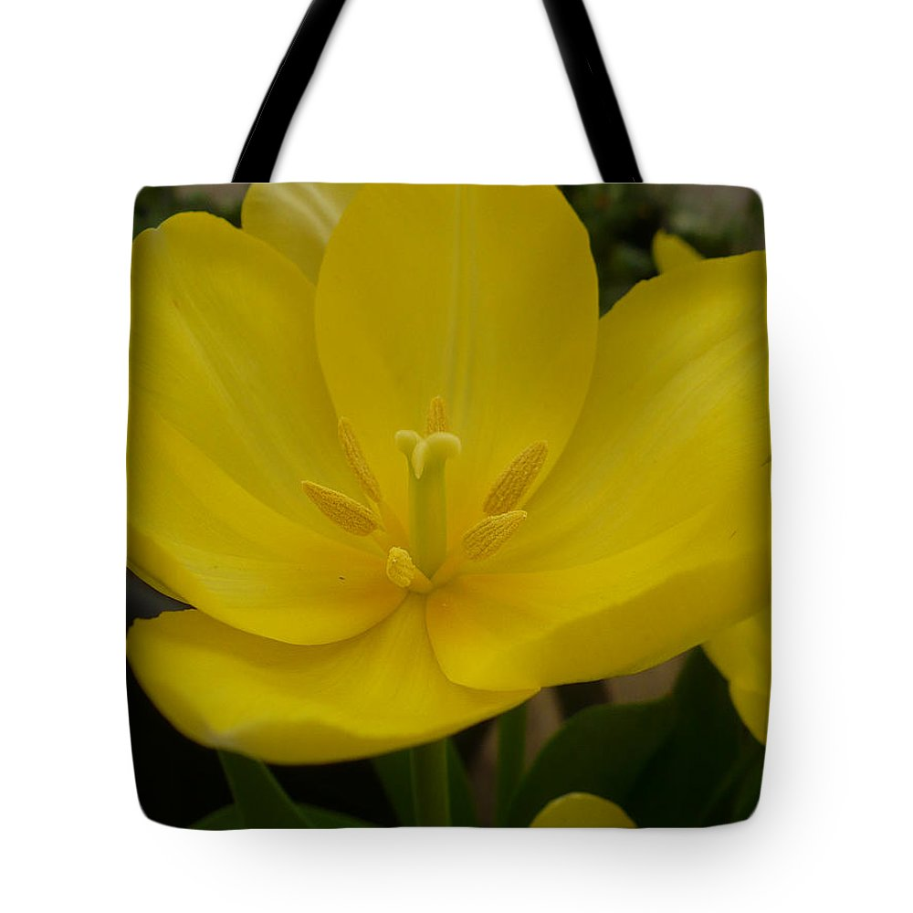 Tote Bag featuring the photograph Yellow Tulip by Nicki Bennett