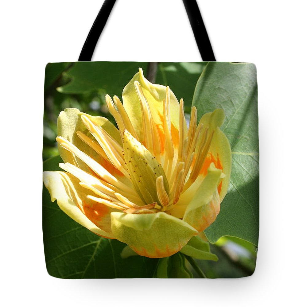 Tulip.tuliptree Tote Bag featuring the photograph Yellow Tuliptree Flower by Christiane Schulze Art And Photography