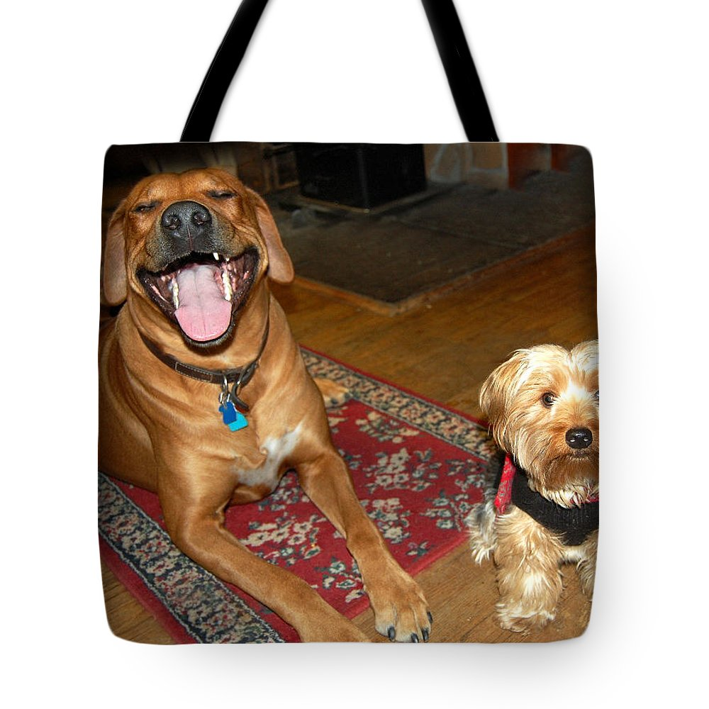 Eli And Meiko Tote Bag featuring the photograph Yorkie And Ridgeback by Mim White
