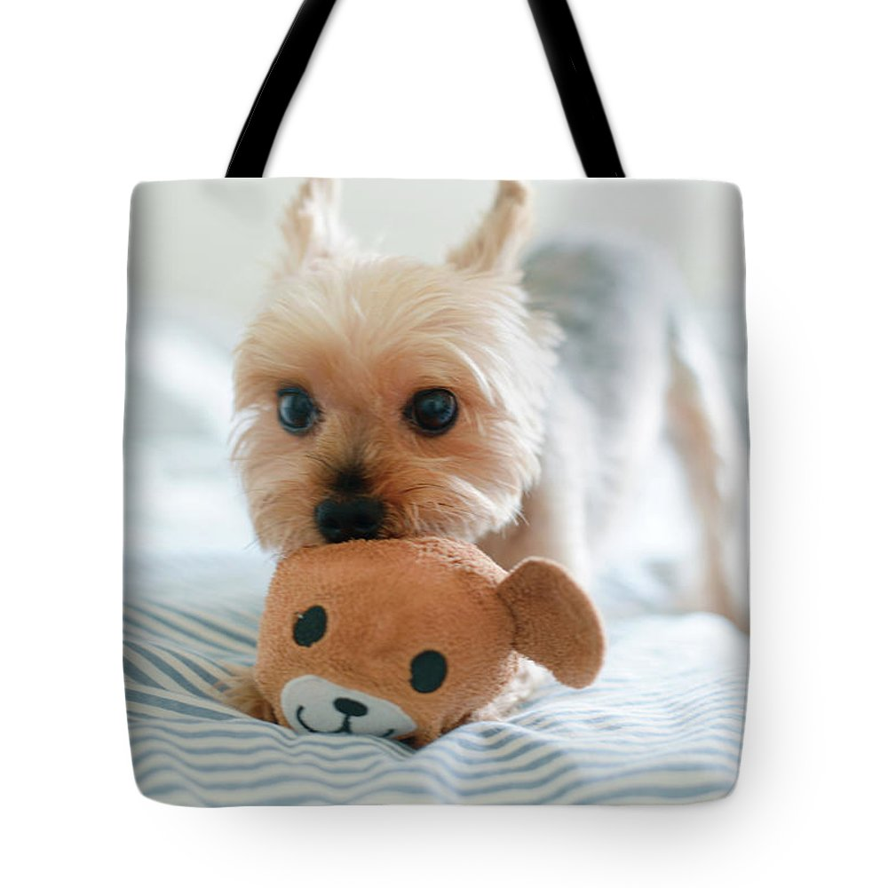 Pets Tote Bag featuring the photograph Yorkie Playing With Teddy Toy by Cheryl Chan