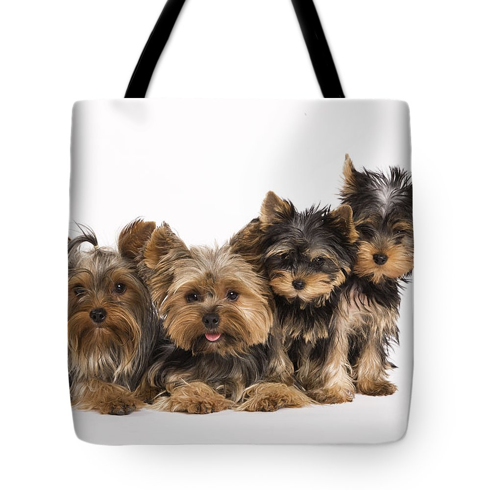 Yorkshire Terrier Tote Bag featuring the photograph Yorkshire Terriers by Jean-Michel Labat