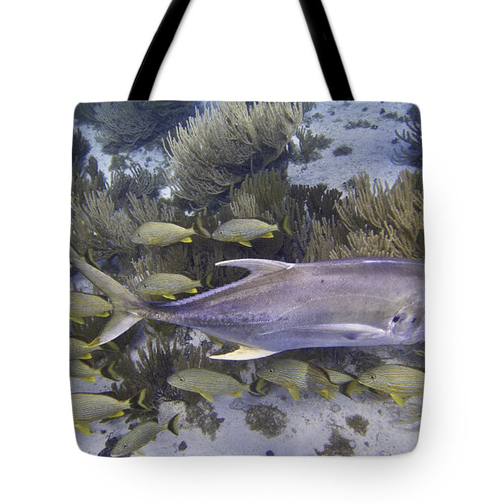 Ocean Tote Bag featuring the photograph You Go This Way by Terry Melius