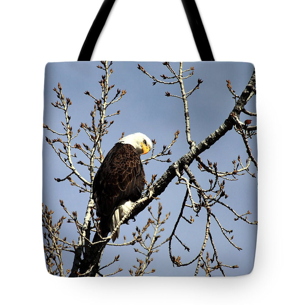 Bald Eagle Tote Bag featuring the photograph You Looking At Me? by Shane Bechler