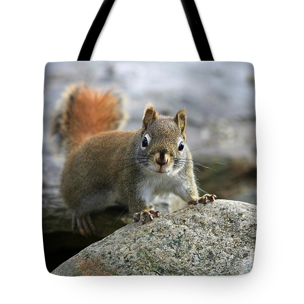 Animal Tote Bag featuring the photograph You Wanna Chat by Deborah Benoit