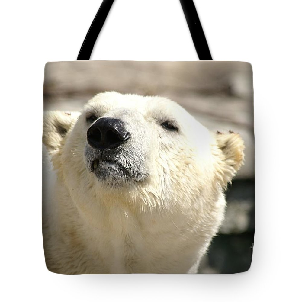 Nature Tote Bag featuring the photograph You Want Something? by Lorelle Gromus
