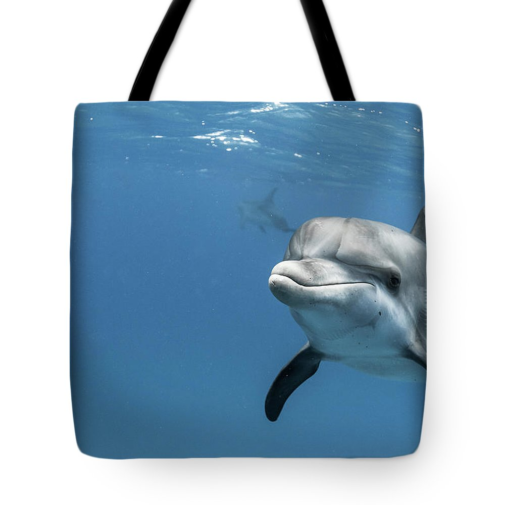 Underwater Tote Bag featuring the photograph Young Atlantic Spotted Dolpin by Kerstin Meyer