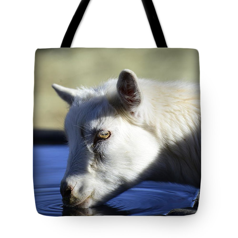 Goat Tote Bag featuring the photograph Young Goat by Dianne Phelps