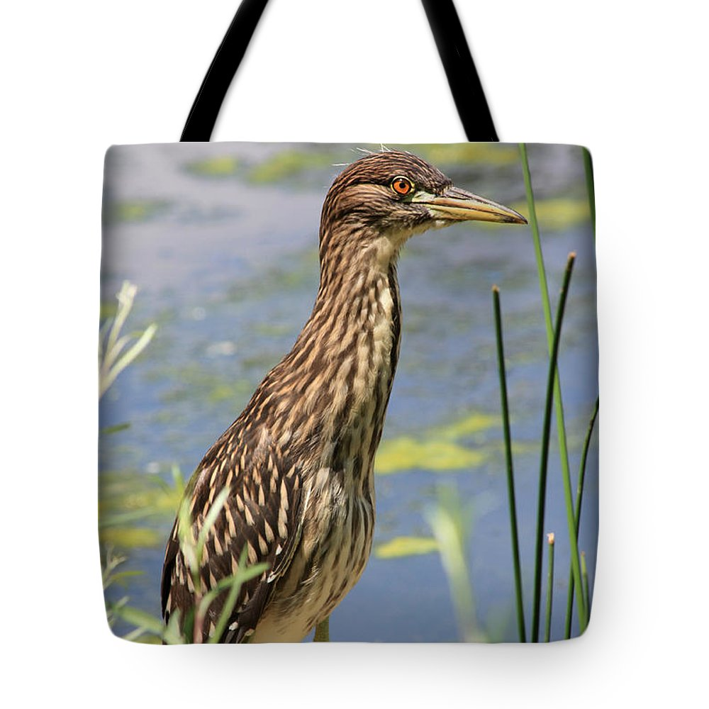 Black Crowned Night Heron Tote Bag featuring the photograph Young Heron by Shane Bechler