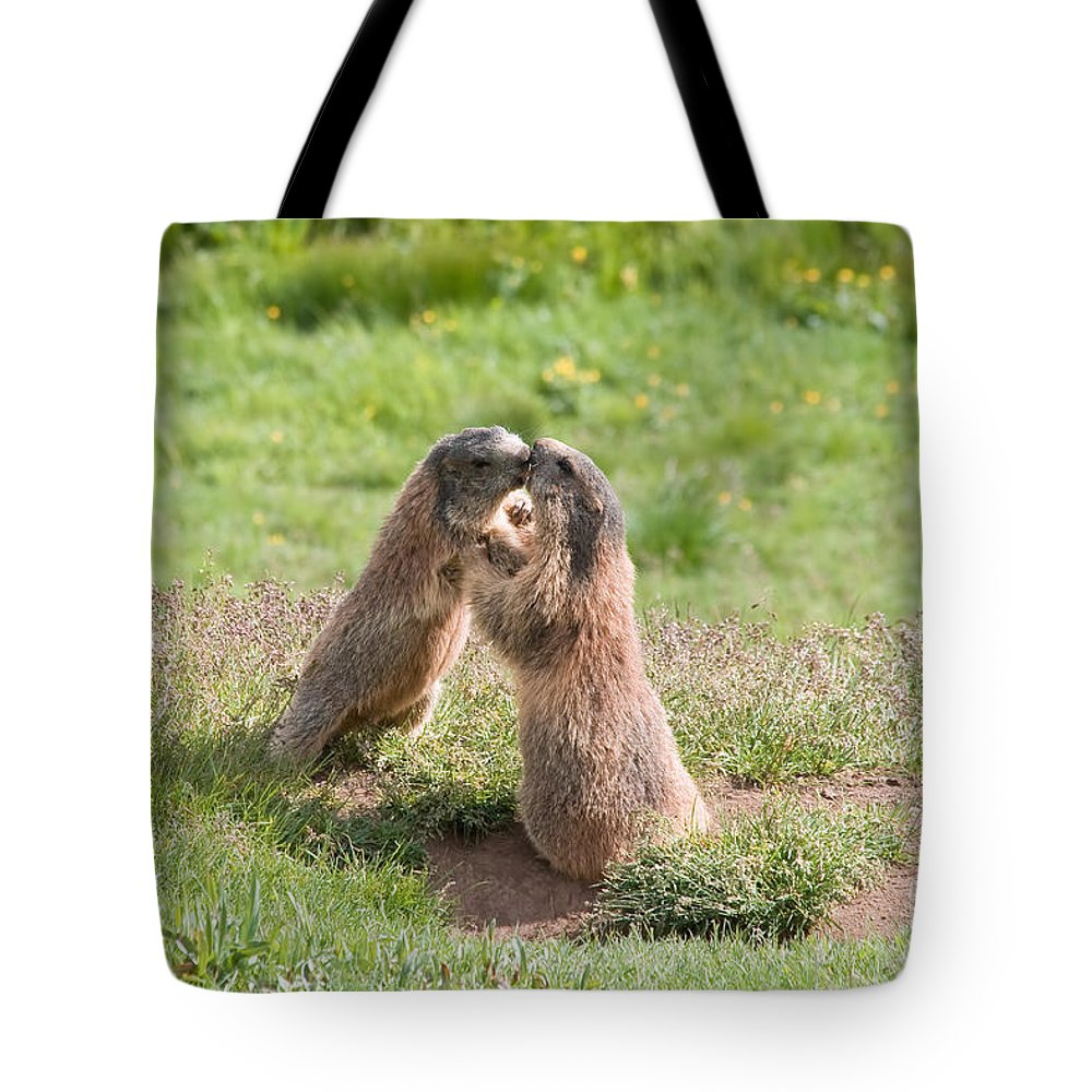 Marmot Tote Bag featuring the photograph Young Marmots by Antonio Scarpi