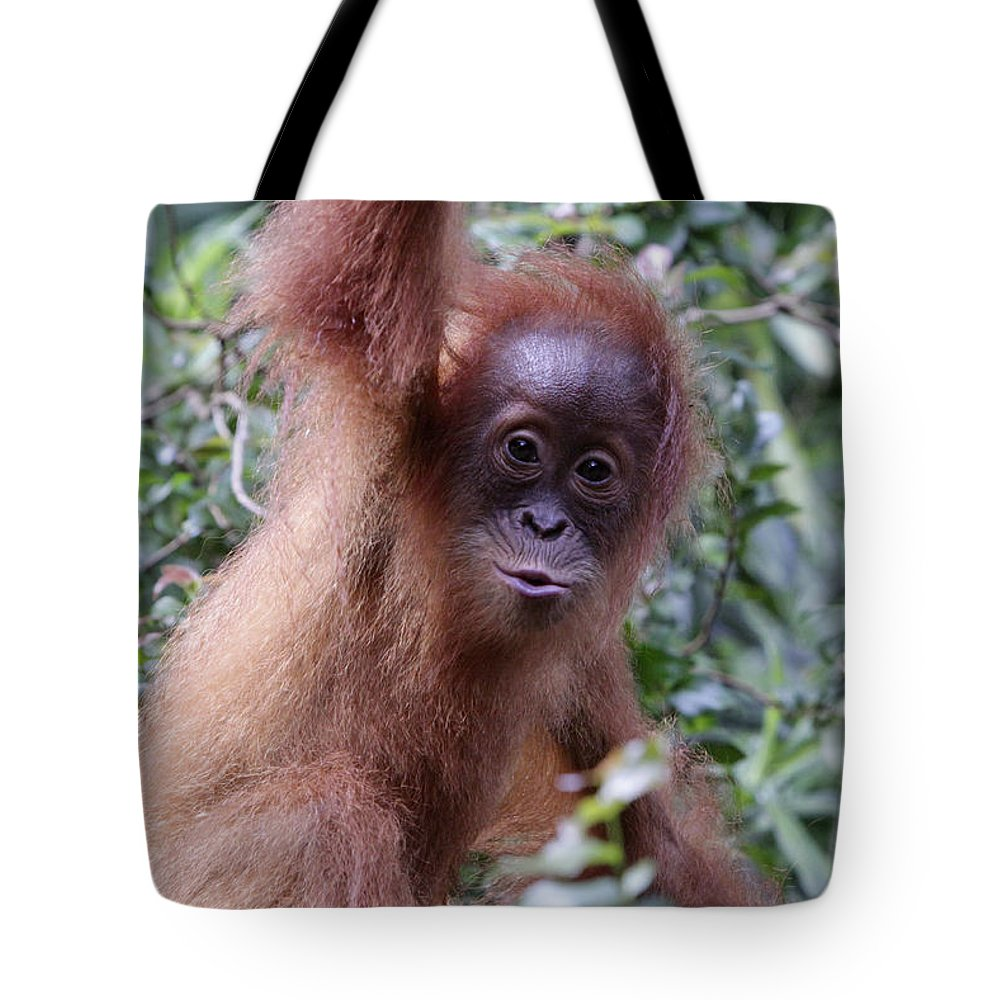 Singapore Tote Bag featuring the pyrography Young Orangutan Kiss by Shoal Hollingsworth