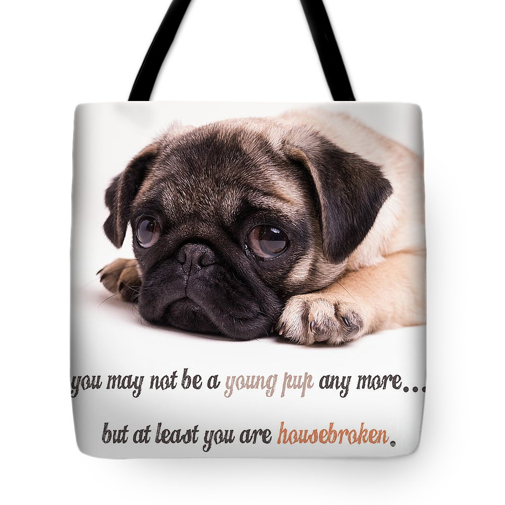 Mature Tote Bag featuring the photograph Young Pup by Edward Fielding