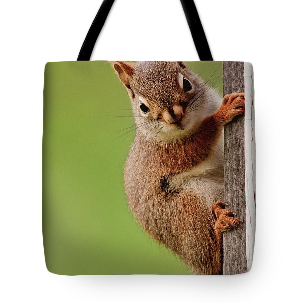 Red Squirrel Tote Bag featuring the photograph Young Red Squirrel by Cheryl Baxter