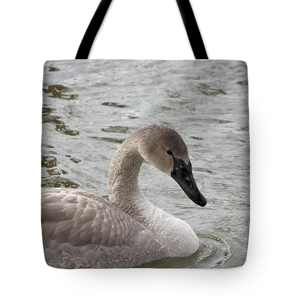 Swan Tote Bag featuring the photograph Young Trumpeter by Penny Meyers