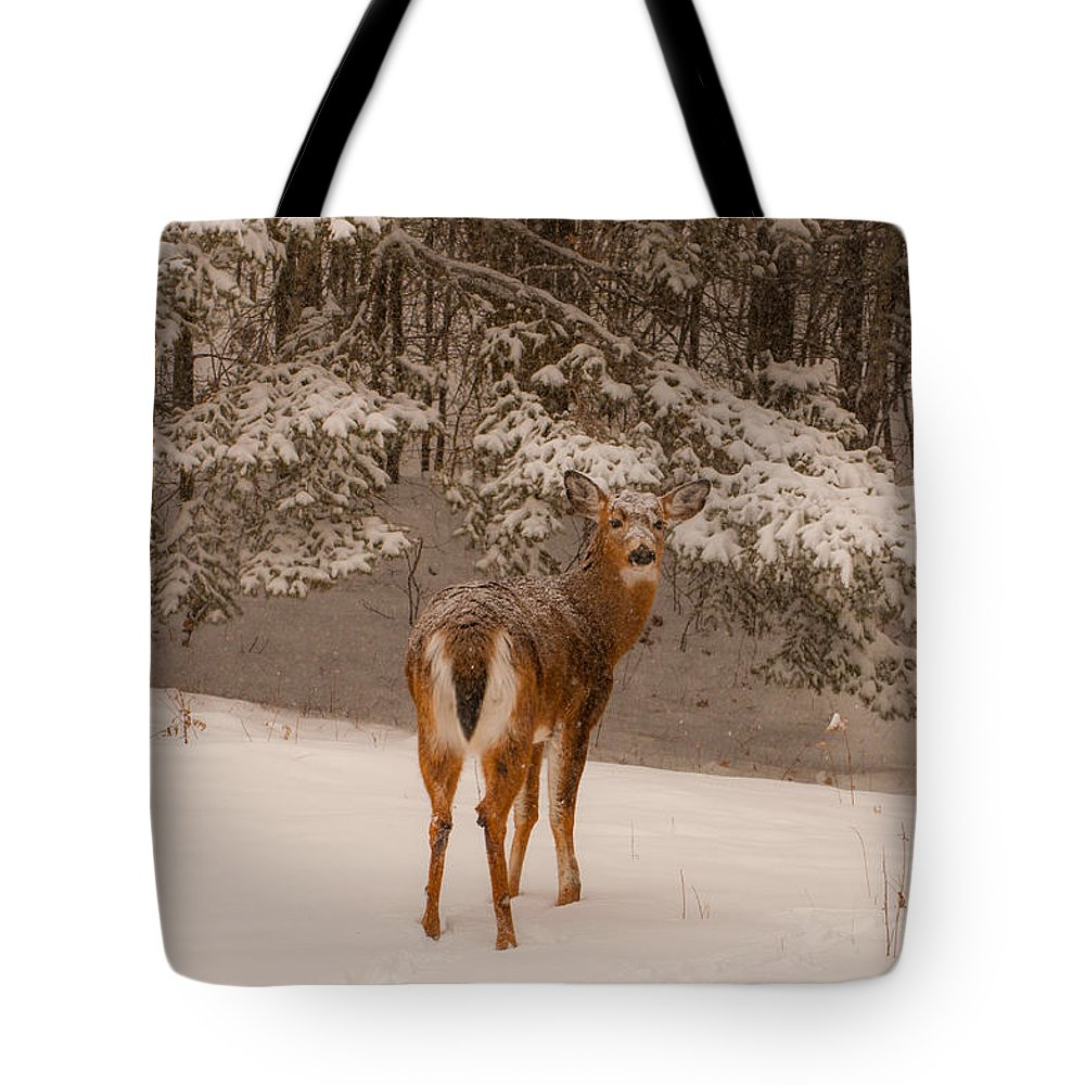 Brenda Jacobs Fine Art Tote Bag featuring the photograph Young White Tailed Buck In Winter by Brenda Jacobs