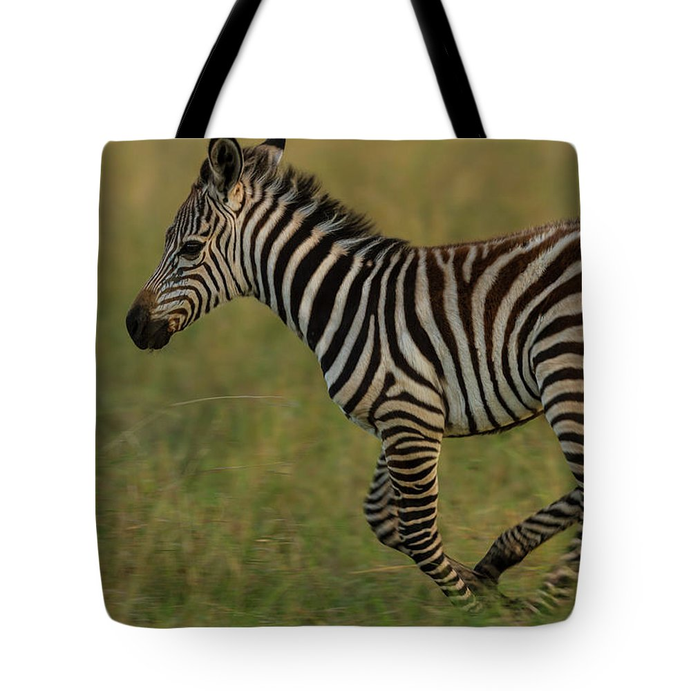 Plains Zebra Tote Bag featuring the photograph Zebra Foal Running For Joy by Manoj Shah
