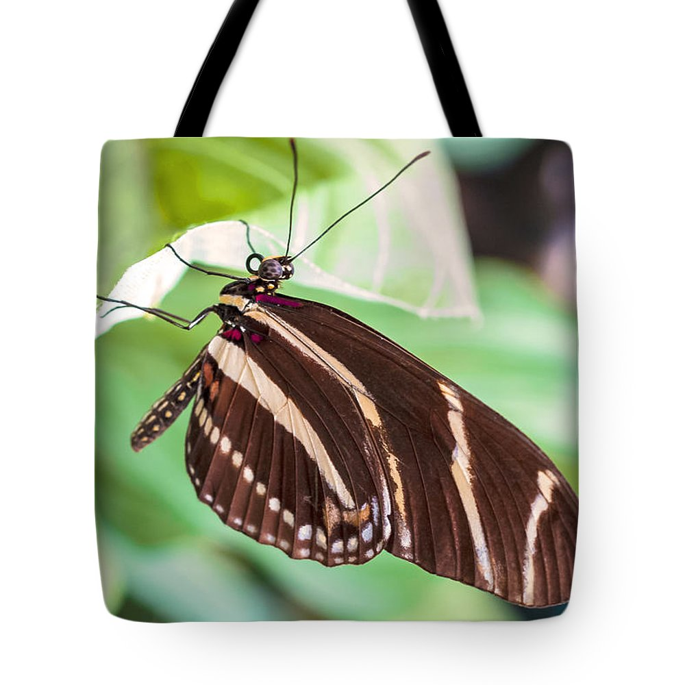 Nj Tote Bag featuring the photograph Zebra Iv by Pablo Rosales