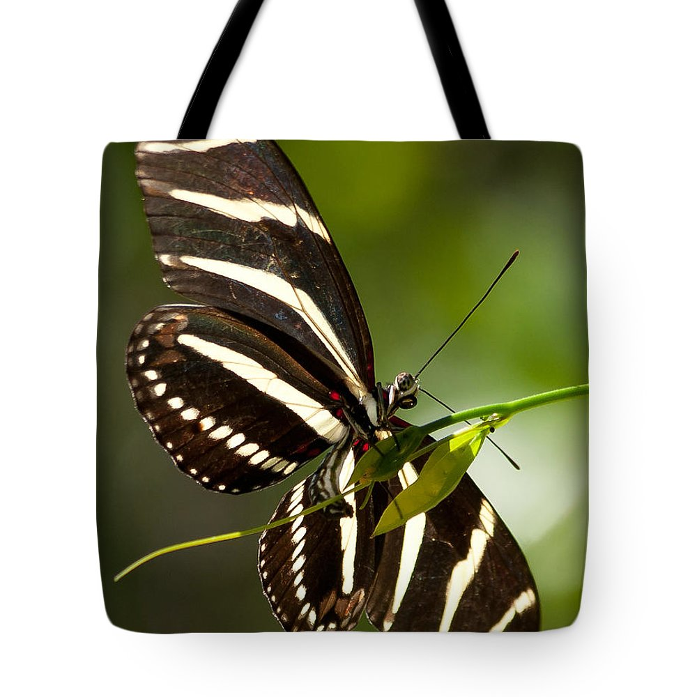 Zebra Tote Bag featuring the photograph Zebra Longwing 3 by Photos By Cassandra