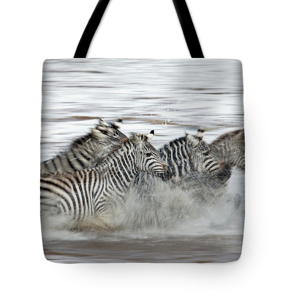 Plains Zebra Tote Bag featuring the photograph Zebras Crossing The Mara River by Aditya Singh