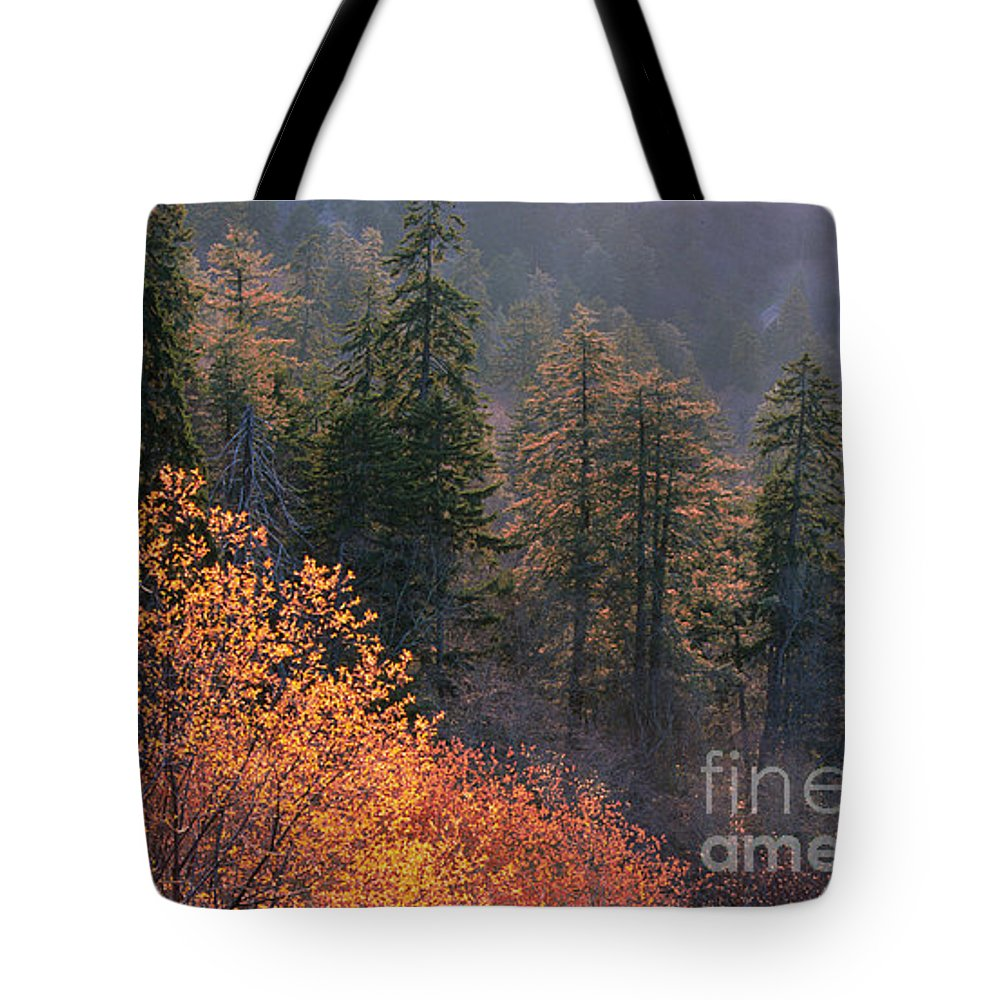 Tote Bag featuring the photograph Great Smoky Mountains Morning by Sandra Bronstein