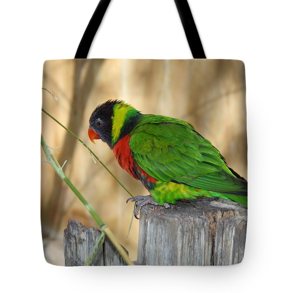 Lorikeet Tote Bag featuring the photograph Lorikeet Parrot Sitting On A Fence Post by Terry Fleckney