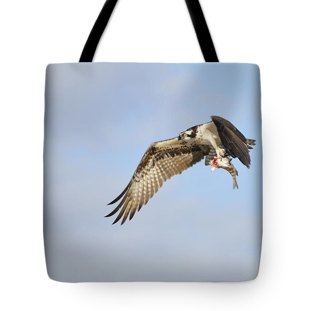 Osprey Tote Bag featuring the photograph Osprey Lunch To Go I by Christine Stonebridge