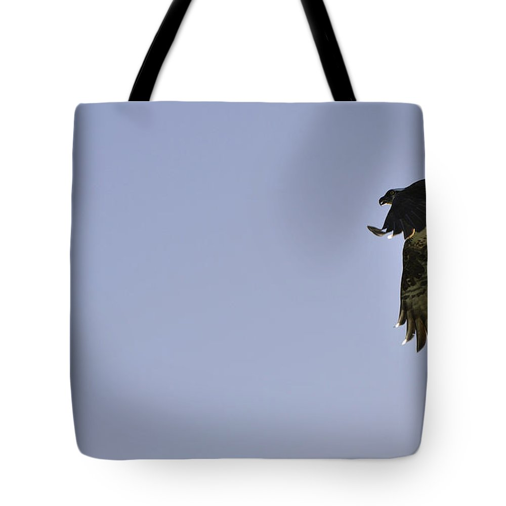 Osprey Tote Bag featuring the photograph Osprey Lunch To Go IIi by Christine Stonebridge