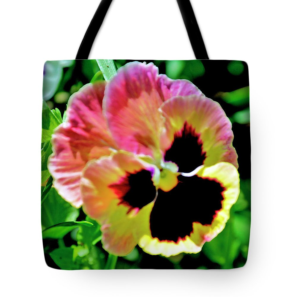 Flowers Tote Bag featuring the photograph Pink And Yellow Pansy by Helen Haw