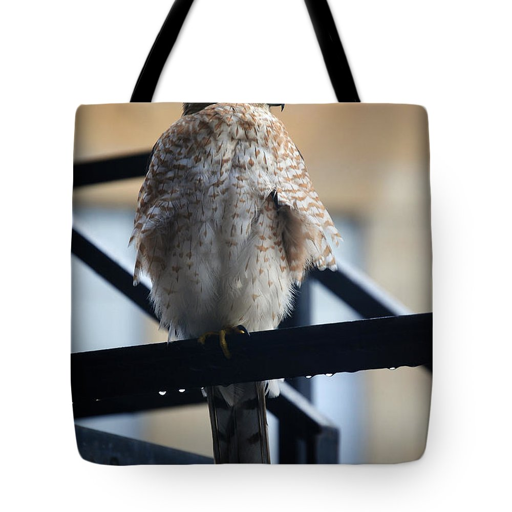 Tote Bag featuring the photograph 01 Falcon by Michael Frank Jr