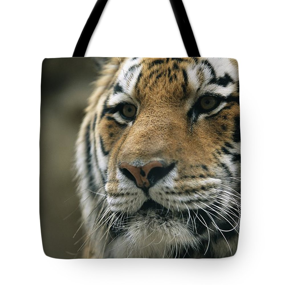 North America Tote Bag featuring the photograph A Close View Of The Face Of Khuntami by Joel Sartore