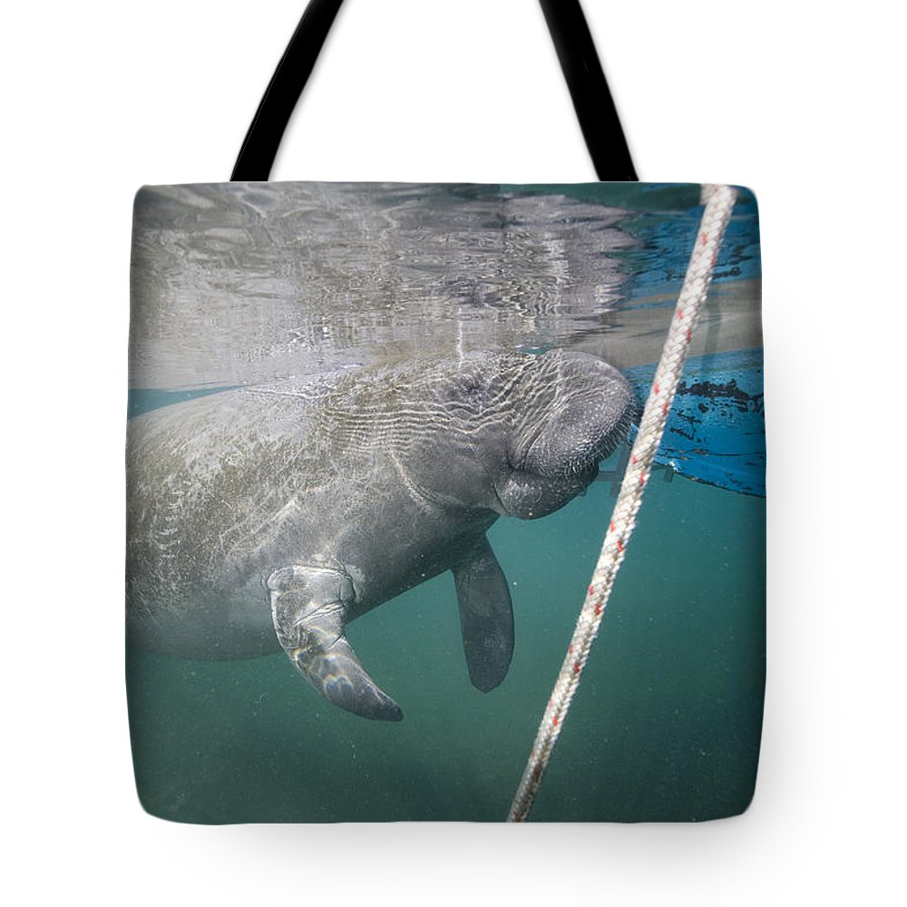 Florida Tote Bag featuring the photograph A Manatee Gets Dangerously Close by Nick Norman