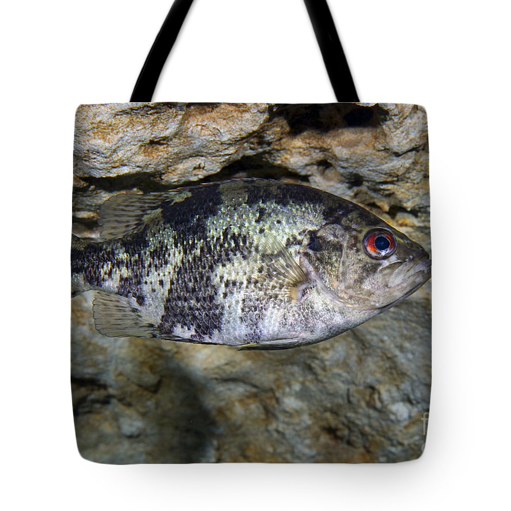 Fish Tote Bag featuring the photograph A Shadow Bass Hovers Motionless by Terry Moore