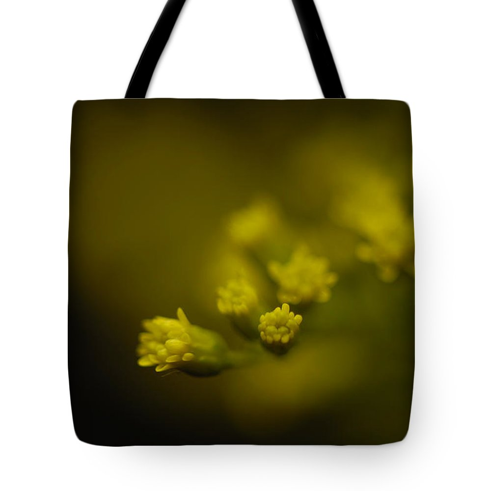 Photography Tote Bag featuring the photograph A Solidaster Solidaster Luteus by Joel Sartore