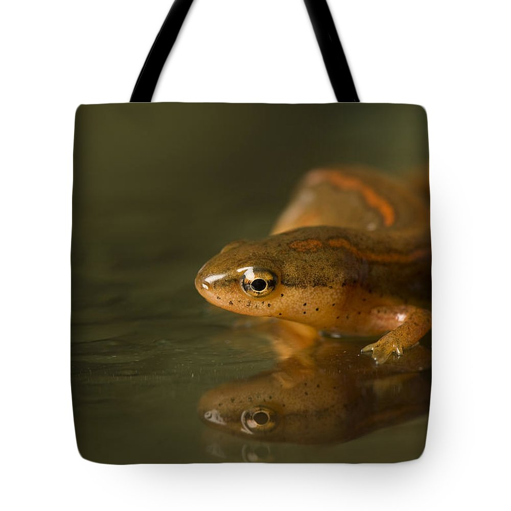 Wichita Tote Bag featuring the photograph A Striped Newt Notophthalmus by Joel Sartore