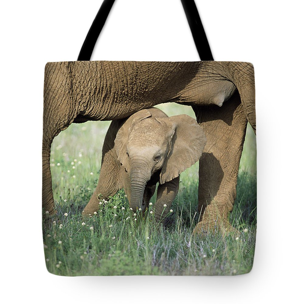 Npl Tote Bag featuring the photograph African Elephant Loxodonta Africana by Karl Ammann