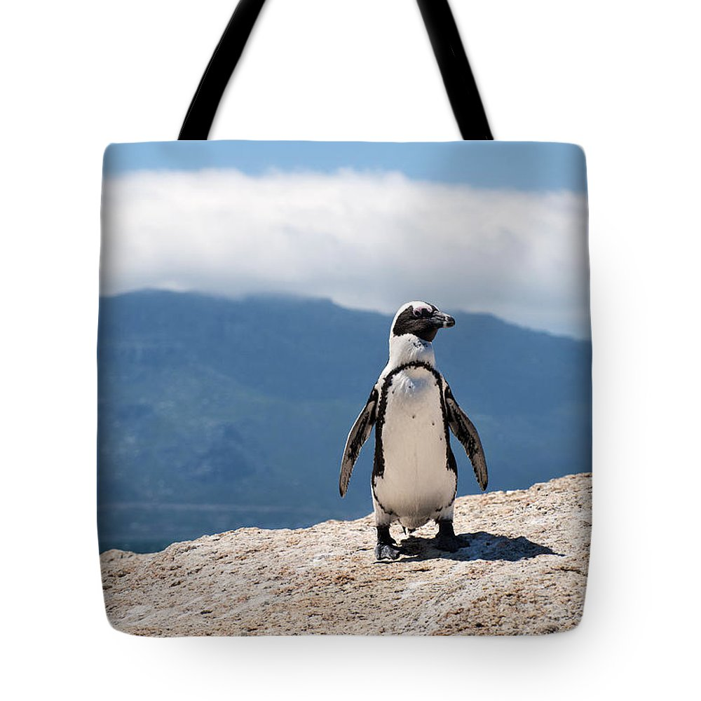 African Penguin Tote Bag featuring the photograph African Penguin by Fabrizio Troiani