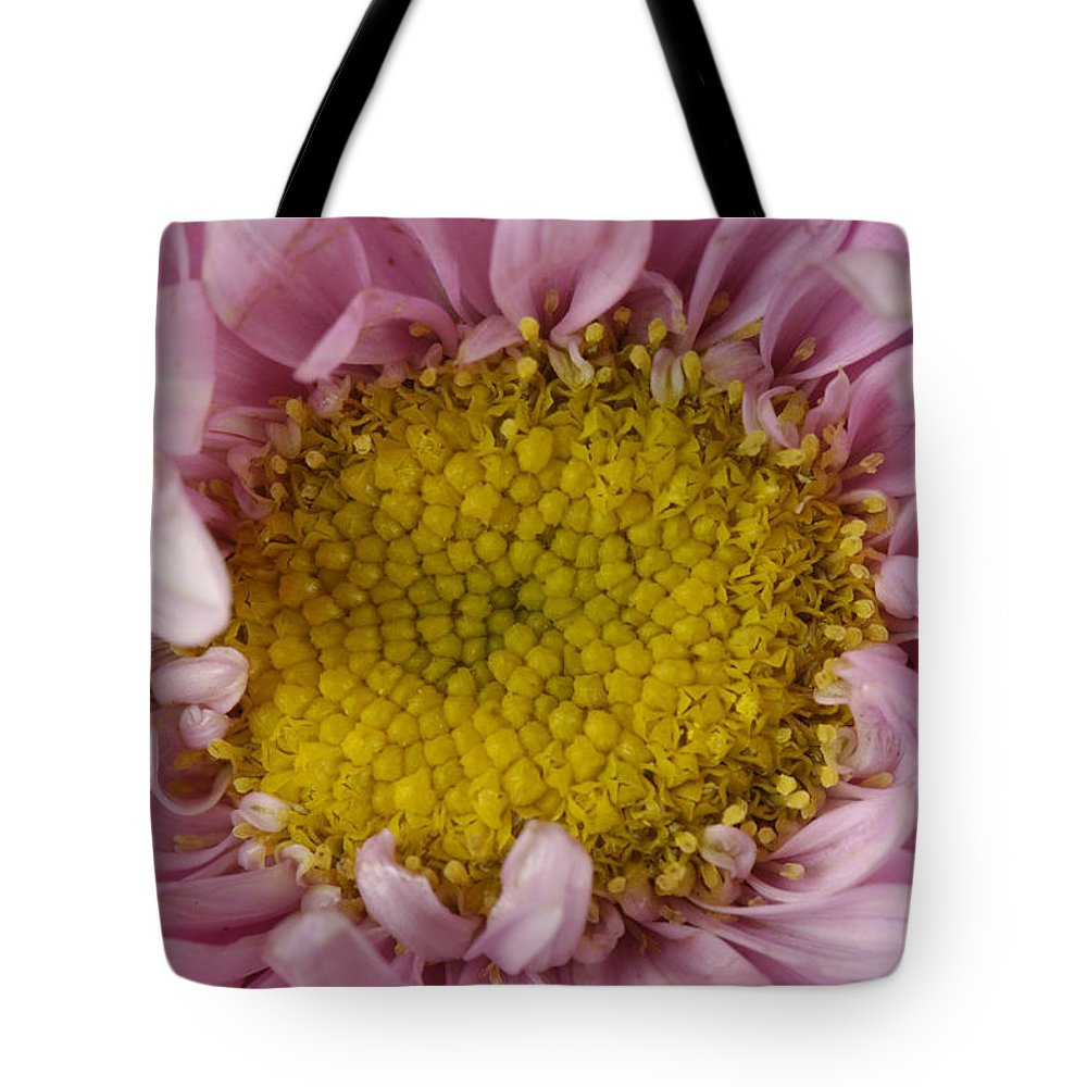 Photography Tote Bag featuring the photograph An Aster Flower Aster Ericoides by Joel Sartore