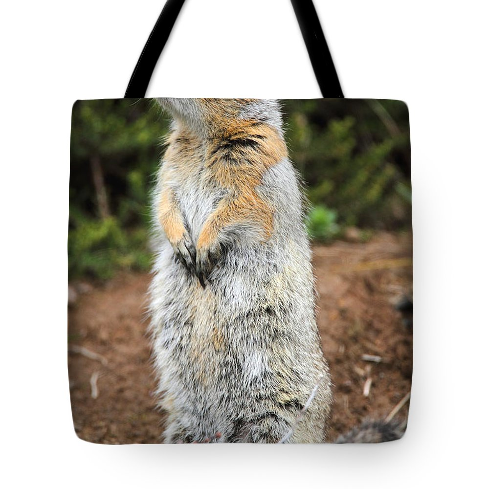 Doug Lloyd Tote Bag featuring the photograph Arctic Ground Squirrel by Doug Lloyd