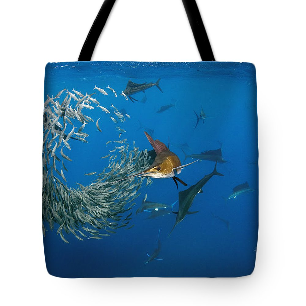 Mp Tote Bag featuring the photograph Atlantic Sailfish Istiophorus Albicans by Pete Oxford