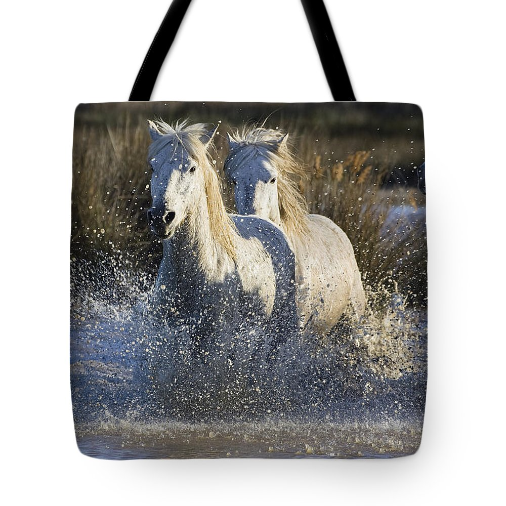Mp Tote Bag featuring the photograph Camargue Horse Equus Caballus Group by Konrad Wothe