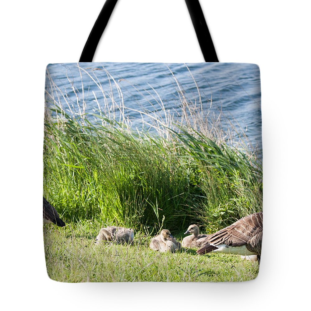Geese Tote Bag featuring the photograph Canada Geese by Dawn OConnor