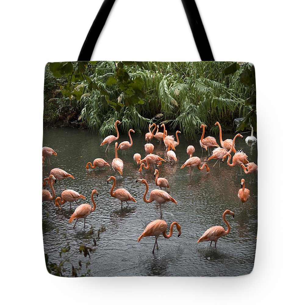 Wichita Tote Bag featuring the photograph Caribbean Flamingos At The Zoo by Joel Sartore