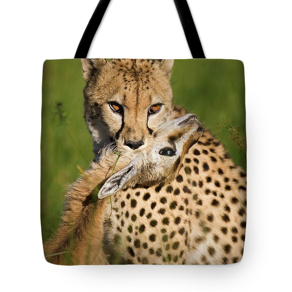 Mp Tote Bag featuring the photograph Cheetah Acinonyx Jubatus With Its Kill by Suzi Eszterhas
