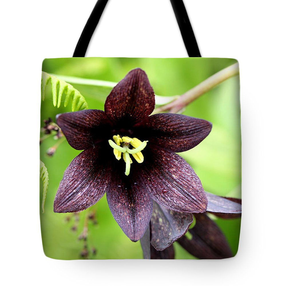 Doug Lloyd Tote Bag featuring the photograph Chocolate Lilly by Doug Lloyd